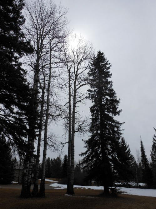 April Overcast Sunshine