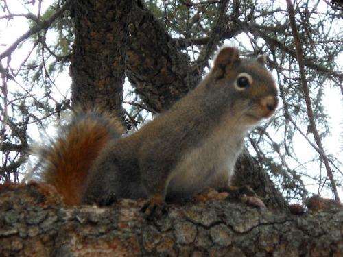 local squirrel checks out the scene