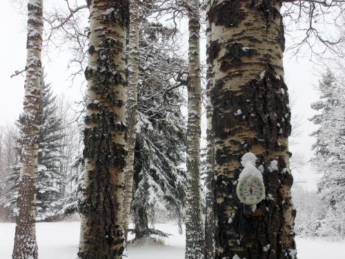 zero celcius with snow