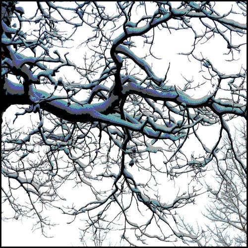 Snowy Poplar branch with colour