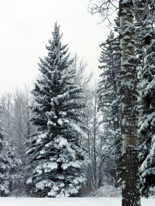 Snowed overnight